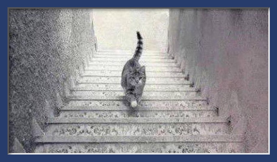 Cat on Stairs Escher