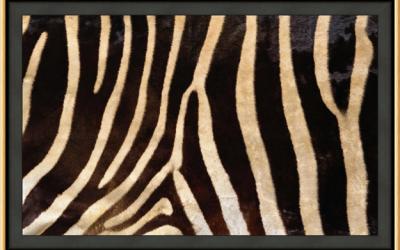 How to Frame Animal Prints and Skins