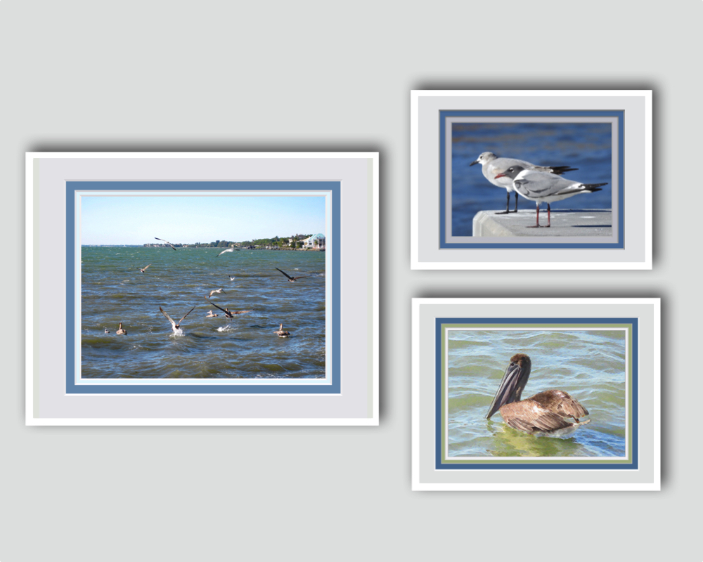 Shore Birds Framed