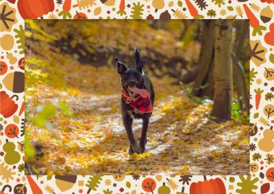 Fall frame for Mac available in ImageFramer
