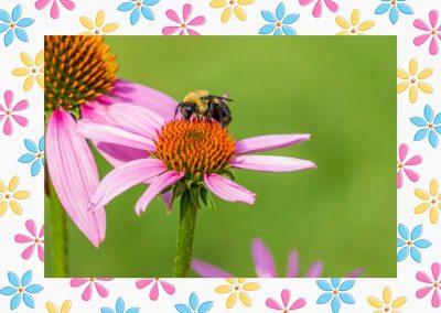 Spring frame for Mac available in ImageFramer